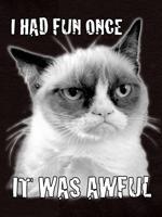 Grumpy Cat Had Fun pullover hoodie